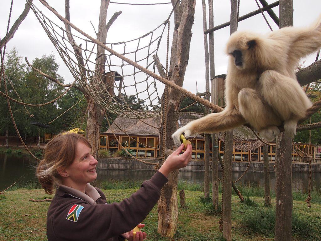 Judith Van Der Loo and gibbon